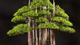 http://www.bonsaiempire.com/origin/bonsai-artists/north-america/john-naka
