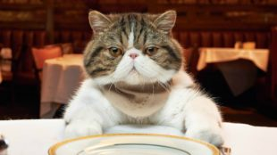 Animals___Cats_Unhappy_with_the_cat_at_the_table_094883_