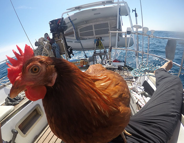 sailing-chicken-guy-monique-guirec-soudeel-21