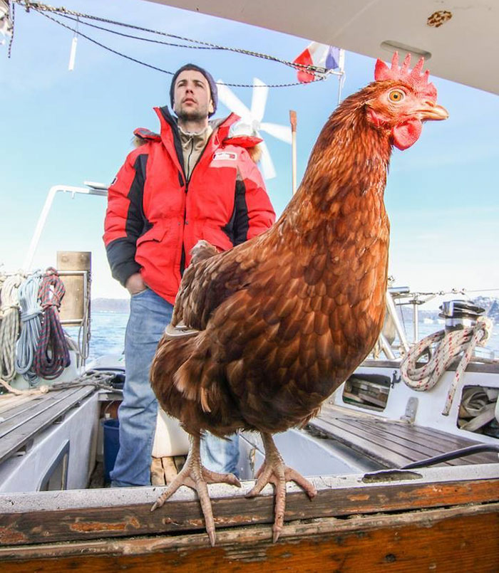 sailing-chicken-guy-monique-guirec-soudeel-8