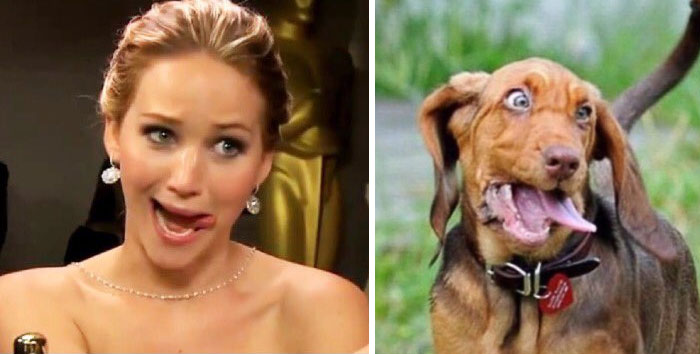 humans-look-like-dogs-doppelganger-you-are-dog-now-twitter-83-57a46bd80d15b__700