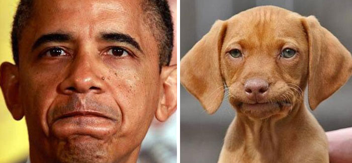 humans-look-like-dogs-doppelganger-you-are-dog-now-twitter-87-57a46bdeae141__700
