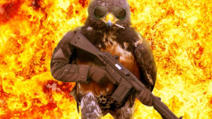 funny-hawk-photoshop-battle-3-57f1fd4c7dad9__700