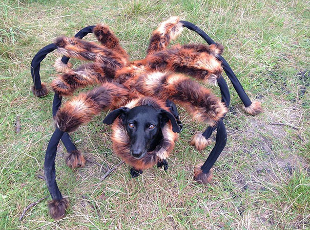 halloween-dog-costumes-4-57fcb64d8fee7__605