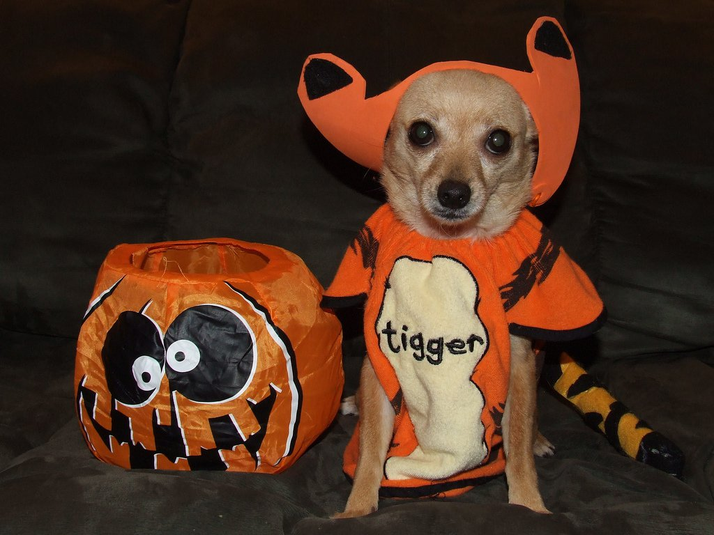 halloween-homemade-dog-treats-by-s13610