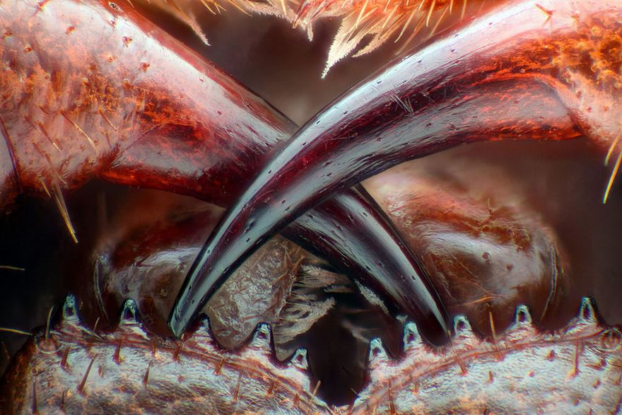 nikon-small-world-photography-winners-201677-580f40b8135db__880