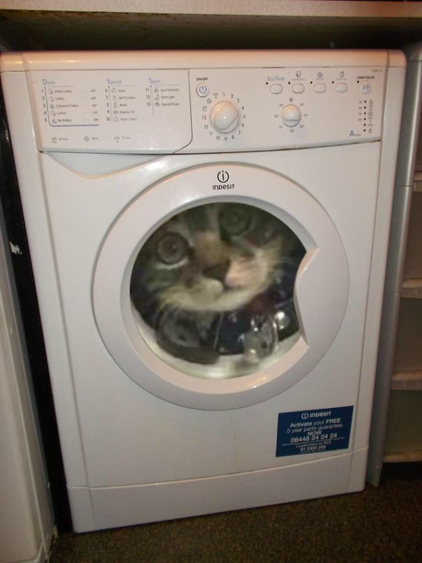 Giant-Cat-Stuck-in-Washing-Machine-5809274b3b00e__605